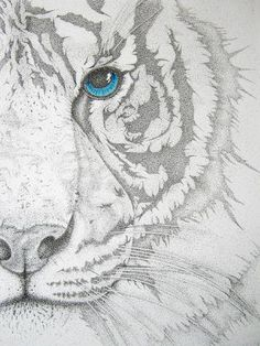 "Buy Piercing II, a Pen and Ink on Paper by Mayhem Mediums from United States. It portrays: Animal, relevant to: Tiger prints, Tiger canvas prints, Tiger drawings, Tiger art, bengal tiger canvas prints, bengal tiger prints, tiger canvas pritns, tiger, tigers, Bengal tiger Original art work, Pointillism and pastels.   24"" x 18"""
