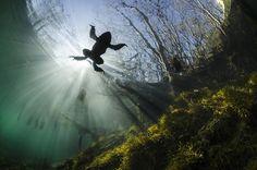 Finalista Gran Angular: Prince of the water (Yannick Gouguenheim/Francia) - Las mejores fotos submarinas del año - Libertad Digital