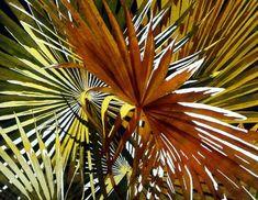 """Summer Wonder"" by Jaimie  Cordero, Aquarelle Studios and  Galleries Watercolor Tips, Watercolor Painting Techniques, Watercolor Texture, Texture Painting, Watercolor Flowers, Watercolor Paintings, Painting Tips, Painting Art, Botanical Art"