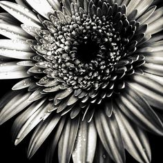 Value- Value includes lights and darks and blacks and whites. This picture is a good example of it because of the way the flower has different whites and blacks. Values do not have any sort of colors to it. This picture really contrasts the lights and darks.