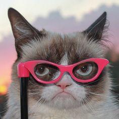 grumpy cat wears glasses