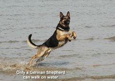 dog obedience training tips German Shepherd Facts, German Shepherd Training, German Shepherd Puppies, German Shepherds, Puppy Biting, Training Your Dog, Training Tips, Happy Dogs, Dog Friends