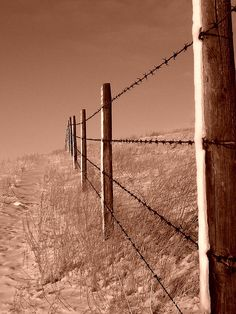 "Winter Fence by Nicole Viste  - reminds me of ""The Boy in the Striped Pajamas"".  :("