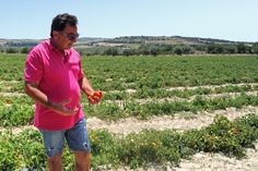 A taste of Sicily - Travel with Kat Sicily Travel, Button Down Shirt, Men Casual, Tomatoes, Mens Tops, Dress Shirt, Casual Male Fashion, Tomato Plants