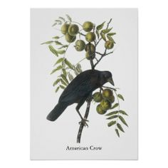>>>The best place          American Crow, John James Audubon Print           American Crow, John James Audubon Print We provide you all shopping site and all informations in our go to store link. You will see low prices onDiscount Deals          American Crow, John James Audubon Print Onlin...Cleck Hot Deals >>> http://www.zazzle.com/american_crow_john_james_audubon_print-228595405990511494?rf=238627982471231924&zbar=1&tc=terrest