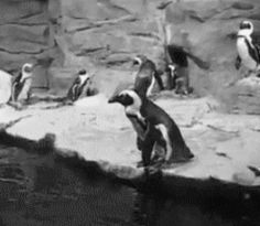 <b>Happy Penguin Awareness Day!</b> You should be aware of all of these adorable penguin gifs. Enjoy.