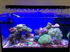 Indoreefclub.com        indonesian reef                             I like its LED lights , perfect  👌👌