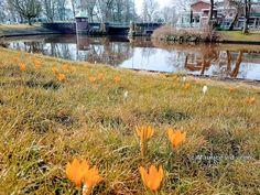 Foto - Google Foto's zicht op de vrouwenpoortsbrug westerplantage