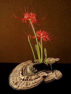 Ikebana, Japan, by Atsushi . Amaryllidaceae flower on bracket fungus. Ikebana Flower Arrangement, Ikebana Arrangements, Floral Arrangements, Deco Floral, Art Floral, Floral Design, Japanese Plants, Japanese Flowers, Bonsai