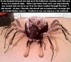 Spider Dog Costume--haha imagine this when it's dark Dog Spider Costume, Spider Dog, Costume Halloween, Giant Spider, Wolf Spider, Spider Prank, Halloween Clothes, Spider Girl, Funny Cute