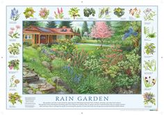 A rain garden is nothing more than a depression in your yard planted with native plants that collects water run-off from your roof, driveway or other hard surfaces. Rain Garden Design, What Is Green, Garden Pictures, Native Plants, Permaculture, Garden Planning, Garden Plants, Garden Landscaping, Outdoor Gardens