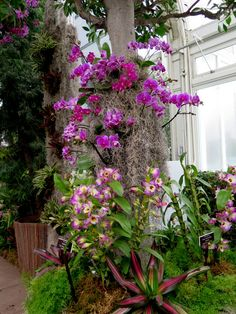 One of the most beloved events at the New York Botanical Gardens is The Orchid Show. This year all stops have been pulled and the thousands of orchids are displayed up high looking like colored lig...