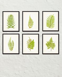 Vintage Ferns - Botanical Print Set - Printed on archival canvas - Makes a charming vintage display - Multiple Sizes - Free US Shipping – Belle Maison Art