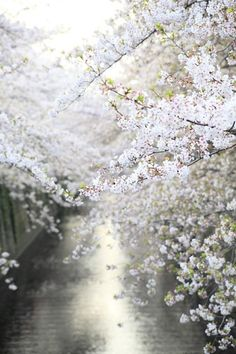 spring flowers in bloom Beautiful World, Beautiful Places, Beautiful Pictures, Flower Power, Decoration Plante, Shades Of White, Belle Photo, Spring Time, Early Spring