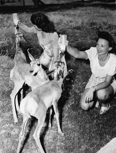 Women feeding antelope near Hoover Dam, NV. Reclamation file photo, exact date unknown. #TBT #throwbackthursday