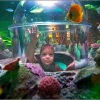Great lakes aquariums michigan
