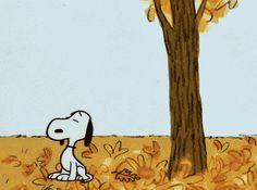Chat alors ... même Snoopy aime l'automne !