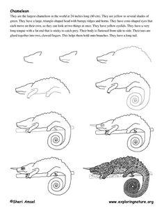 http://www.exploringnature.org/graphics/drawing/chameleon_drawing.jpg