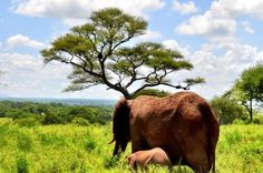 Wildlife Conservation Isn't a Political Issue, It's a Human One