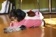 Dog dressed as a sundae or sundae dressed as an ewok?  You decide.