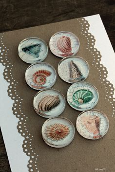 glass magnets :: shells I by ola smith, via Flickr for glass, magnets, adhesive: http://www.ecrafty.com/c-81-craft-supplies.aspx