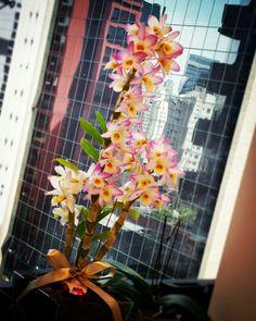 Orquídea - Vila Olímpia