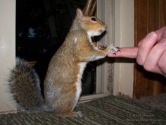A handshake between a person and a squirrel