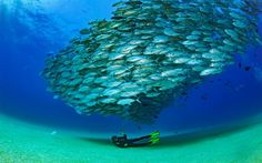The story of Cabo Pulmo, Marine Nature Reserve in Baja California Sur, Mexico