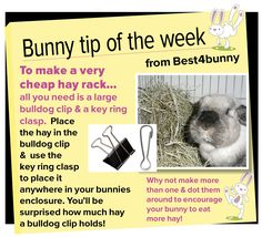 Bunny tip - week 12 For a cheap hay rack - all you need is a bulldog clip and a key ring clasp!