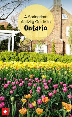 From sugar shacks to tulip festivals, explore Ontario this spring. Vacation Trips, Vacation Spots, Spring Vacation, Vacations, Best Places To Travel, Places To See, Ottawa Tourism, Ontario City, Ontario Travel