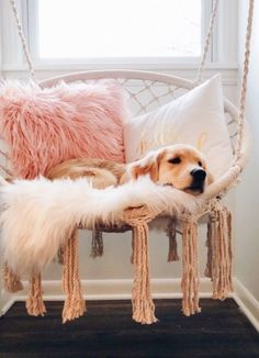 Get the support you need when buying or selling a home … – Home DIY Decoratio… – Nette Katze und Hund Welpen - Baby Animals Cute Dogs And Puppies, I Love Dogs, Pet Dogs, Dog Cat, Samoyed Dogs, Maltese Dogs, Corgi Puppies, Rescue Dogs, Puppy Husky
