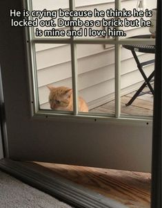 This cat has totally forgotten how doors work. | 23 Pictures Of Cats That Will Destroy Your Faith In Cat Education