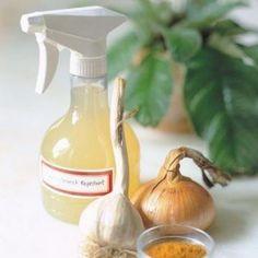 spray-anti-plagas
