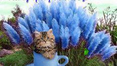 Καλή Τρίτη με χαρά φίλοι μου και όμορφες εικόνες.! - eikones top Cats, Animals, Gatos, Animales, Animaux, Animal, Cat, Animais, Kitty