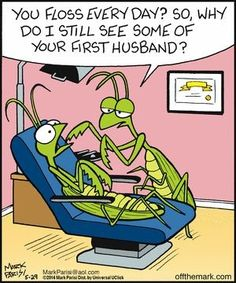 """""""You floss every day? So, why do I still see some of your first husband?"""" Dr. Praying Mantis DDS Dentaltown Jokes"""