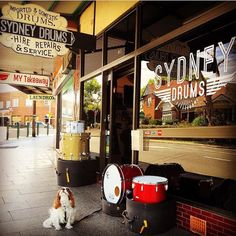 C&C Drums Sydney Australia. Come in Saturday & meet the trio.. Playerdate I Luan Mahogany Playerdate II Maple/Mahogany/Maple & Ruby our 12th & Vine in Maple/Poplar/Maple.. & check out our range of Istanbul Agops finest cymbals & the custom painted drum heads of @agpainteddrumheads --- #candcdrums #drumkit #drums #drum #drummingco #drumming #snare #ccdrums #snaredrum #drumlife #drummer #Sydney #Australia #sydneydrums