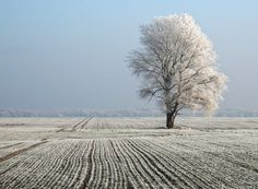 Winter Photography: 12 Examples of How to Photograph the Cold Season