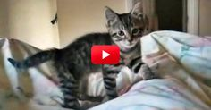 Watch How This Energetic Kitten Greets Her Owner Every Morning — Adorable!   The Animal Rescue Site Blog