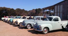 A special site at Emu Ridge today, we had all the lovely people from the Holden Club of SA called in to visit. The FJs ranged from 1948 to the 1956 era. Vintage Cars, Antique Cars, Holden Australia, Australian Cars, Kangaroo Island, Custom Vans, Emu, Life Photo, Hot Cars