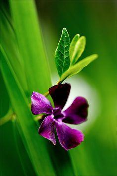 Purple andgreen