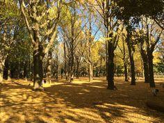 Autumn of Yoyogi Park,Tokyo.