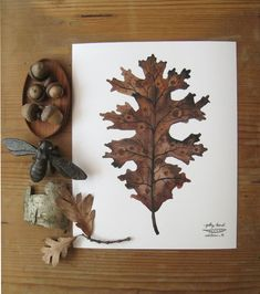 Oak Leaf botanical archival print watercolor reproduction