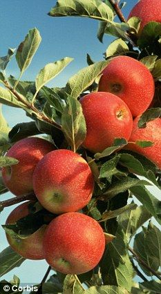 Jonathan Fruit And Veg, Fruits And Vegetables, Fresh Fruit, Apple Garden, Fruit Garden, Colorful Fruit, Exotic Fruit, Fruit Plants, Fruit Trees