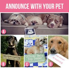 Announce with your Pet- If you have your own little fur babies at home, why not let them announce the news?(50 Creative Pregnancy Announcements) birth announcement. due date. ultrasound. pregnancy. kids. pets. cat lover.
