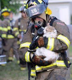 Firefighter saving a cat
