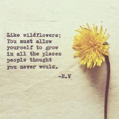 Like wildflowers, you must allow yourself to grow in all the places people thought you never would.