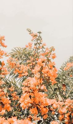 flower aesthetic x Peach Aesthetic, Nature Aesthetic, Flower Aesthetic, Aesthetic Drawing, Aesthetic Gif, Aesthetic Collage, Summer Aesthetic, Aesthetic Vintage, Aesthetic Backgrounds