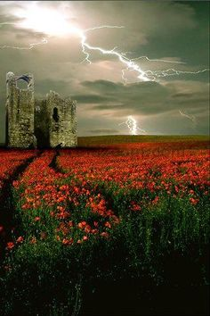 ♂ Aged with beauty, abandoned Castle in the flower field - Stunning Lightning photo Foto Nature, All Nature, Science And Nature, Amazing Nature, Flowers Nature, Red Flowers, Great Photos, Cool Pictures, Beautiful Pictures