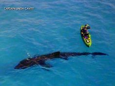 A 30-foot long basking shark was spotted off the coast of Panama City Beach, Florida