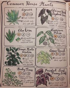 - House Plants - Throw Some Herbs On That Shit — herbwicc: Pages one & two of Common House Pl. Throw Some Herbs On That Shit — herbwicc: Pages one & two of Common House Plants. Garden Journal, Nature Journal, Common House Plants, Illustration Inspiration, Grimoire Book, Green Witchcraft, Herbal Magic, Herbal Oil, Baby Witch